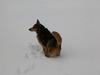Shania_the_3legged_dog